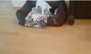 Απολαυστικό βίντεο! Το πρώτο βράδυ ενός κουταβιού στο νέο του σπίτι!