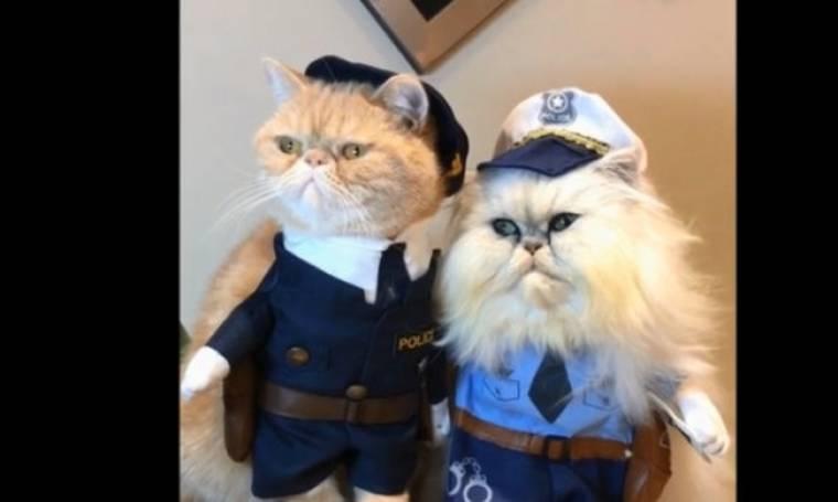 Κι όμως, αυτές οι γάτες είναι αληθινές