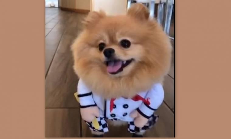 Θα λιώσετε! Η αντίδραση ενός σκύλου, όταν φορά στολή για το... Halloween