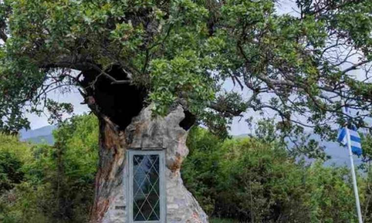 Αυτό το εκκλησάκι -προς τιμήν του Αγίου Παΐσιου – χτίστηκε μέσα σε δέντρο 300 ετών!