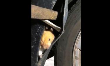 Αυτό το χάμστερ τρύπωσε στον τροχό του αυτοκινήτου