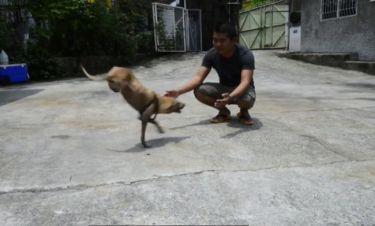 Η δύναμη της θέλησης! Αυτό το σκυλάκι περπατάει με τα δυο του πόδια