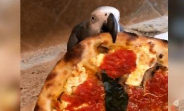 Αυτός ο παπαγάλος λατρεύει την πίτσα!