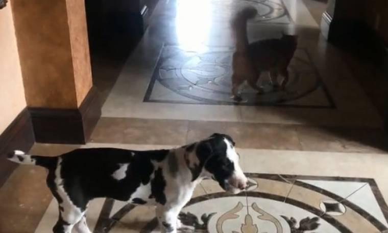 Όταν ένας σκύλος σέβεται το χώρο της γάτας!