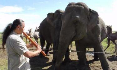 Ο ελέφαντας και το φλάουτο: Ένας απίστευτος χορός (vid)