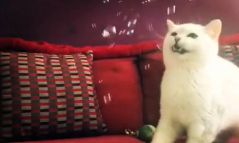 Αυτή η γάτα έχει ξετρελαθεί με τις σαπουνόφουσκες…