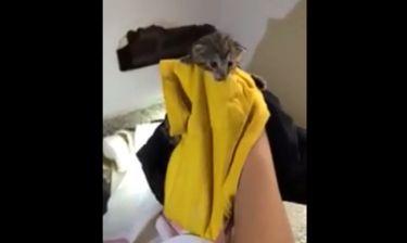 Ζευγάρι σώζει γατάκι που έχει παγιδευτεί μεταξύ δύο τοίχων