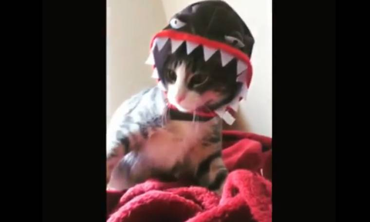 Τρελό γέλιο! Αυτή η γάτα μασκαρεύτηκε για το... Halloween!