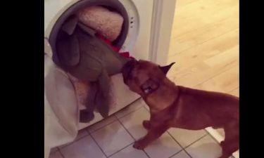 Επικό βίντεο! Σκύλος σώζει... το αγαπημένο του αρκουδάκι (vid)