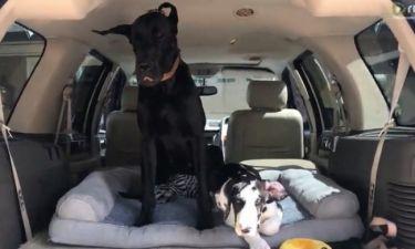 Δείτε πως τα σκυλάκια ανέβηκαν στο πορτμπαγκάζ