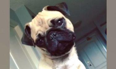 Επικό βίντεο! Οι πιο χαριτωμένοι «περίεργοι» σκύλοι (vid)