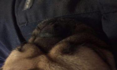 Το πιο τρελό… ροχαλητό βγαίνει από σκύλο! (vid)