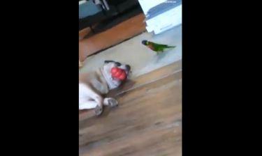 Ποιος είναι πιο κατεργάρης; Ο σκύλος ή ο παπαγάλος;