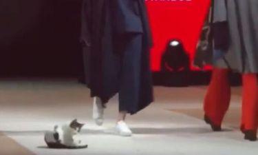 Απίστευτο: Γάτα κλέβει την παράσταση κάνοντας… πασαρέλα! (vid)