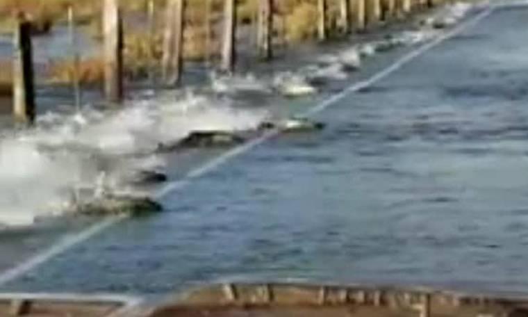 Γιατί σολομοί κολυμπούν σε... δρόμο της Ουάσιγκτον;