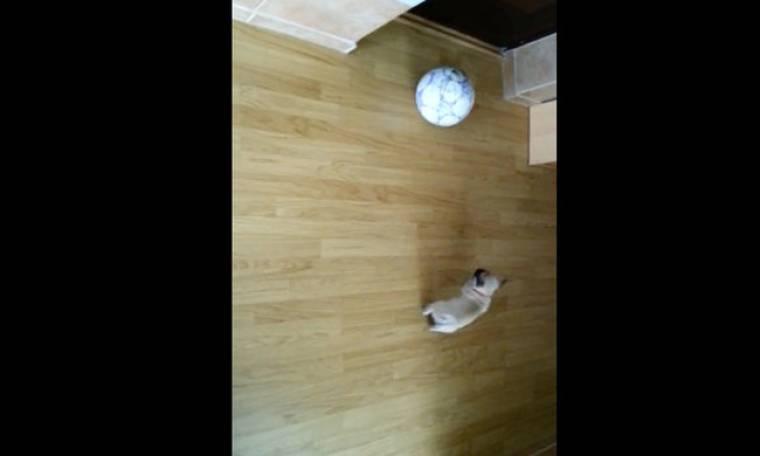 Ένας σκύλος… παιχταράς!