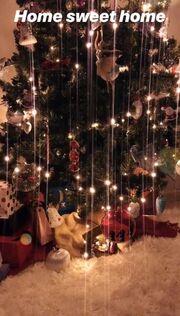 Κατερίνα Καινούργιου: Στόλισε το χριστουγεννιάτικο δέντρο - Η αμακιγιάριστη φωτογραφία στο σαλόνι τη