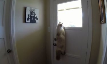 Τρελό γέλιο! Αυτή η γάτα είναι μεγάλη κουτσομπόλα
