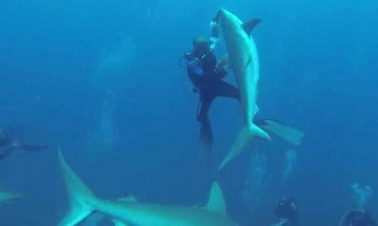 Αυτός ο δύτης χορεύει στο βυθό με καρχαρίες! Απίστευτες εικόνες! (Video)