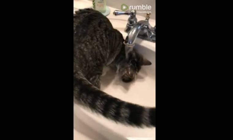 Αυτή η γάτα κάνει κάθε μέρα μπάνιο με ζεστό νερό (video)
