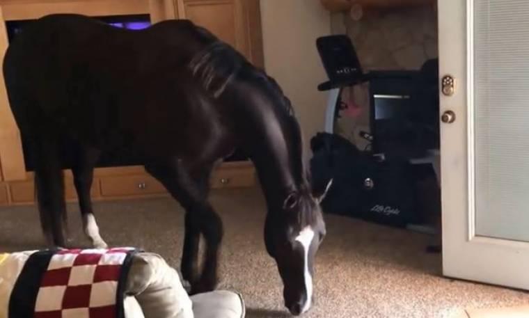Αυτό είναι το πιο φιλικό άλογο που έχετε δει! Δείτε τι έκανε!