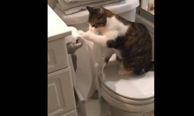 Το απίστευτο παιχνίδι μιας γάτας με το χαρτί τουαλέτας!