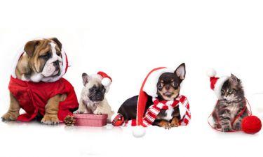 Κράτα τους μακριά, αν θέλεις να ευχαριστηθείς τα Χριστούγεννα!