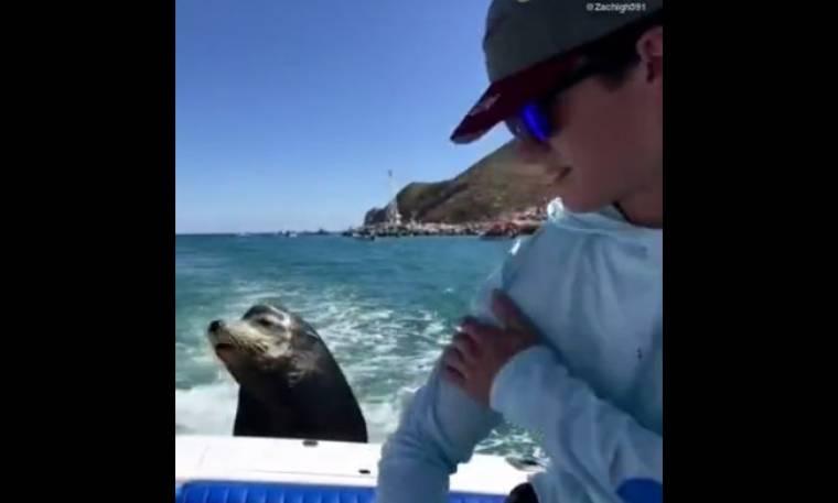 Δεν φαντάζεστε τι έκανε αυτό το θαλάσσιο λιοντάρι! (vid)