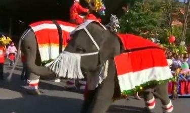 Δεν θα πιστεύετε τι κάνει αυτός ο ελέφαντας!