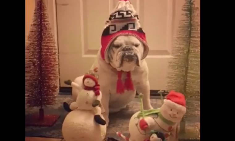 Το πιο όμορφο Χριστουγεννιάτικο στολίδι είναι… αληθινό!