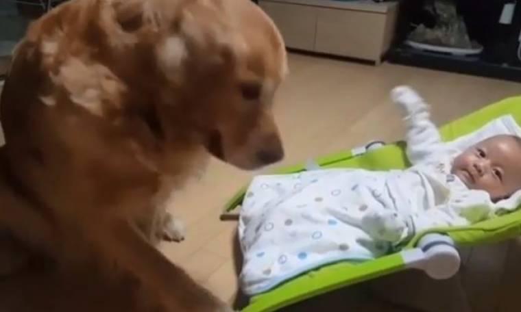 Απίστευτο! Δείτε τι κάνει αυτός ο σκύλος! Έχει πάρει «ζεστά» τον ρόλο του!