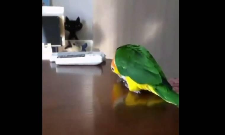 Αυτός ο παπαγάλος είναι... απίθανος! Δεν φαντάζεστε τι κάνει! (vid)
