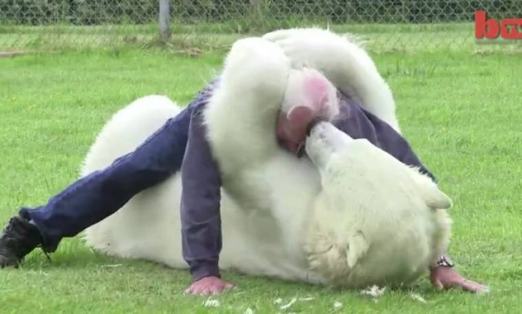 Αυτός είναι ο μοναδικός άνθρωπος στον κόσμο που μπορεί να κολυμπήσει με πολική αρκούδα!