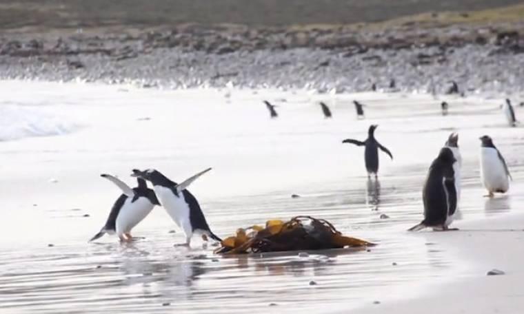 Αυτόν τον πιγκουίνο, μόνο... cool δεν τον λες! Δείτε τον σε... κρίση πανικού!