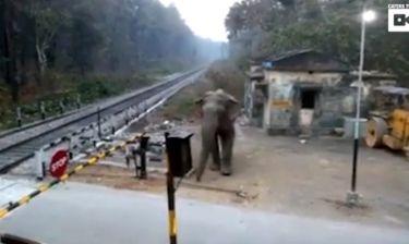 Τι κάνει αυτός ο ελέφαντας όταν δεν μπορεί να περάσει τον δρόμο;