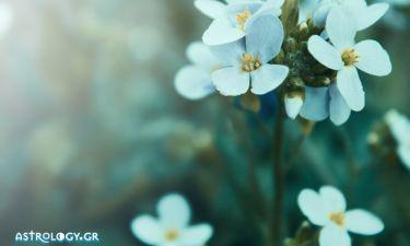 Είδες στον ύπνο σου λουλούδια;