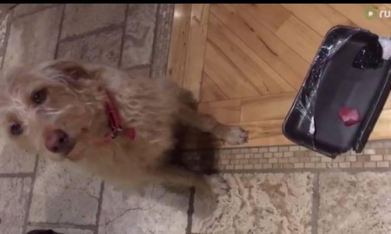 Αυτός ο σκύλος έκανε αταξία και δείτε την αντίδρασή του όταν το μαλώνουν!
