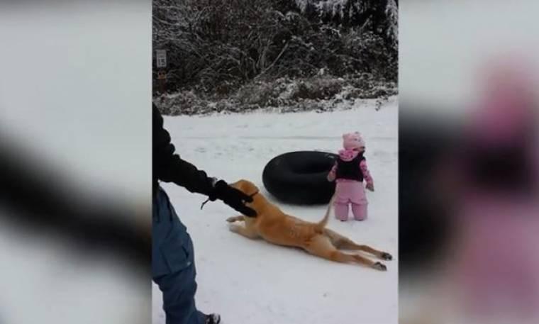 Απίστευτο! Δείτε τι κάνει αυτός ο σκύλος στο χιόνι!