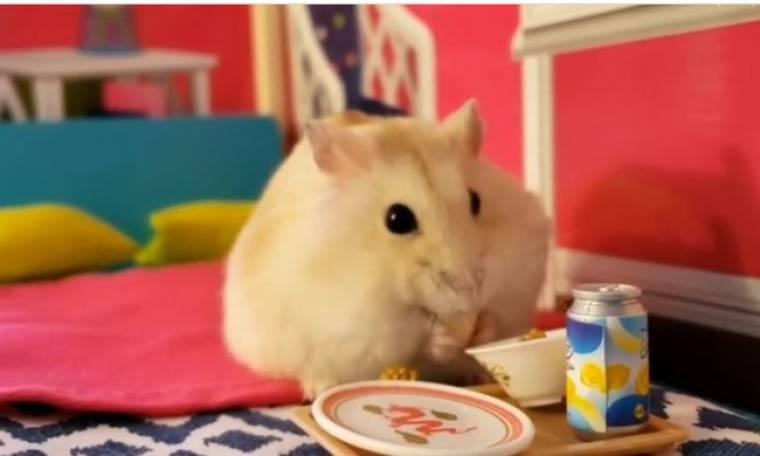 Όταν ένα χάμστερ τρώει πρωινό στο κρεβάτι!