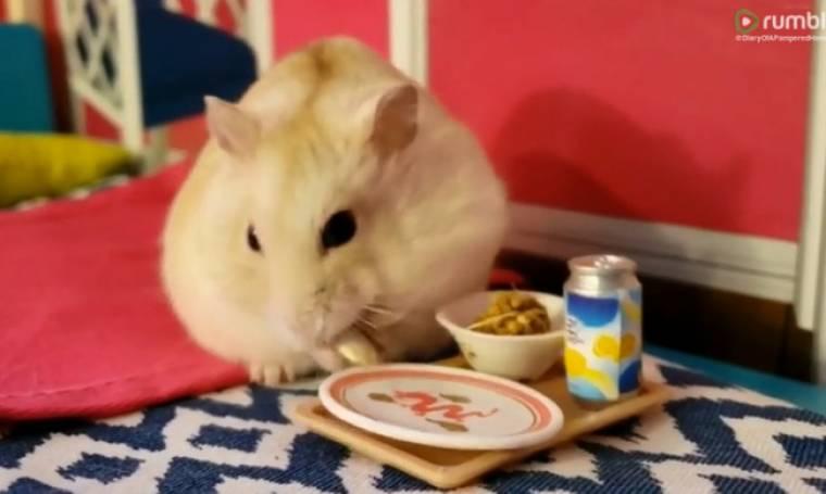 Το χάμστερ τρώει πρωινό στο κρεβάτι