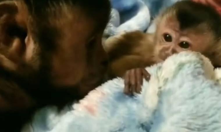 Συγκινητικό! Δείτε πώς αντιδρά μία μαϊμού όταν βλέπει για πρώτη φορά τη νεογέννητη αδερφή της