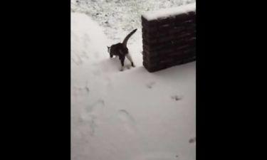 Η απίστευτη αντίδραση γάτας στο χιόνι (vid)