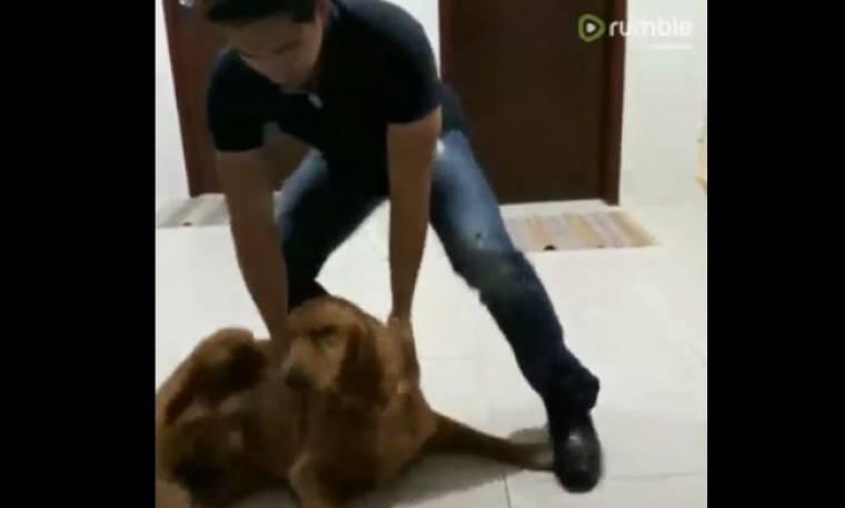 Αξιολάτρευτος! Δείτε την αντίδραση ενός σκύλου όταν βλέπει μετά από εννιά μήνες το αφεντικό του