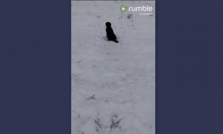 Δείτε την αντίδραση αυτού του σκύλου όταν αντικρίζει το χιόνι