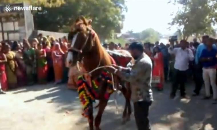 Άλογο επιτέθηκε σε... καλεσμένους γάμου (vid)