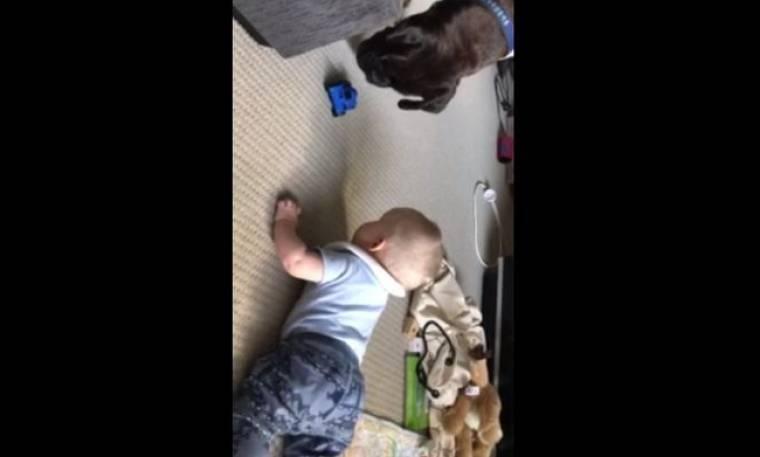 Θα λιώσετε! Ο μπόμπιρας προσπαθεί να πιάσει το παιχνίδι του και τον βοηθά ο σκύλος!