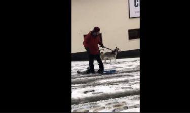 Λατρεύει το χιόνι και το δείχνει! Αυτός ο σκύλος κάνει snowboard με το αφεντικό του!
