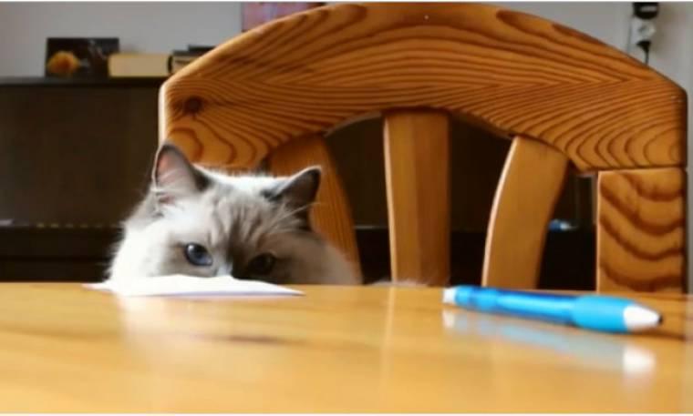 Αυτή η γάτα έχει «κόλλημα» με τα στυλό
