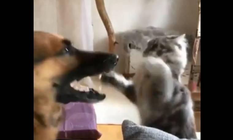 Γάτα και σκύλος σε αστεία...μάχη