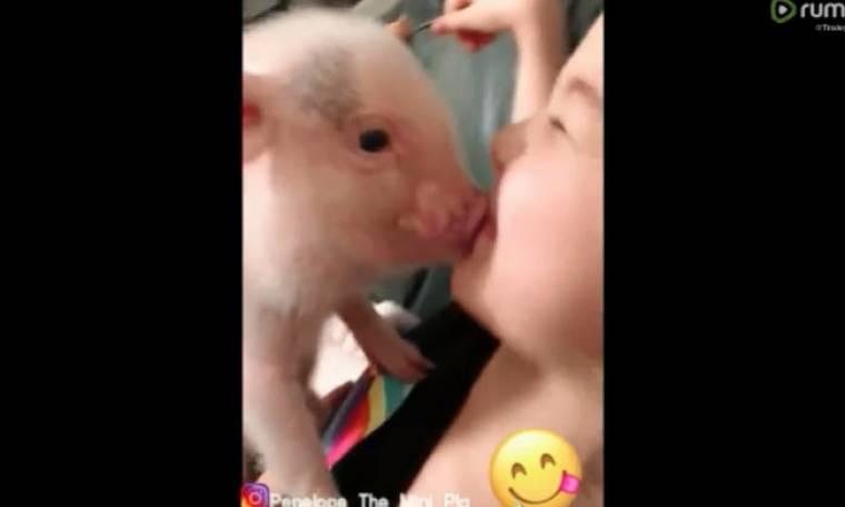 Το κοριτσάκι απολαμβάνει τα φιλιά του μικρού χοίρου